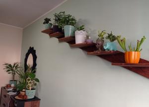 Miniatura produktu Półka kwiatowa